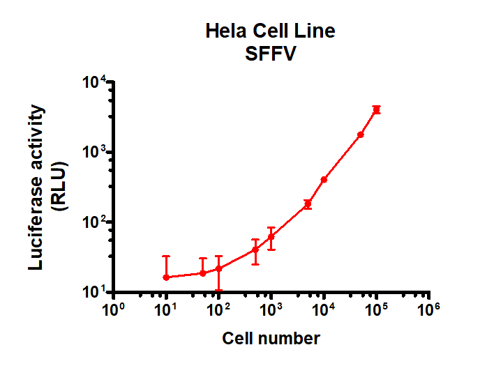 HeLa Cell SFFV Luc Cell
